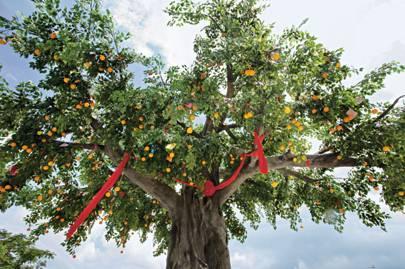The Lam Tsuen Wishing Tree