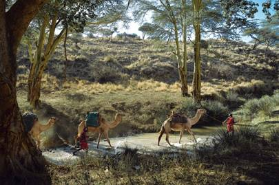 Camels carry camping gear and luggage for a walking-safari group