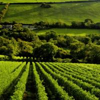 Camel Valley, Cornwall