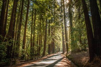 7. Redwood National Park