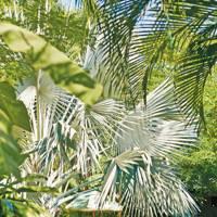 14. Costa Rica