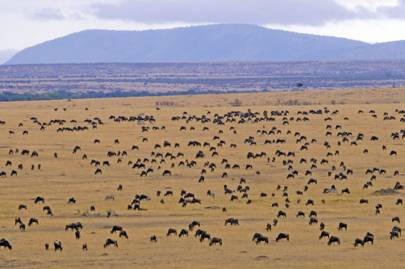 Following the Serengeti Migration