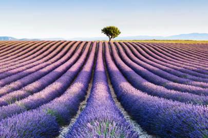 37. Provence, France