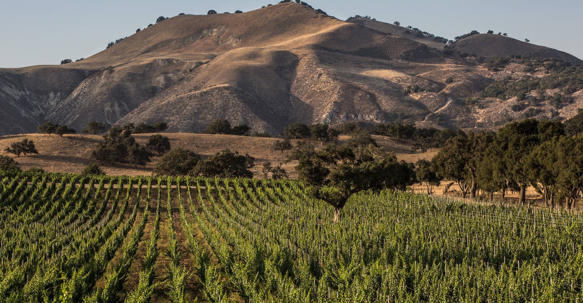 How to visit the vineyards in 'Wine Country' and 'Sideways'