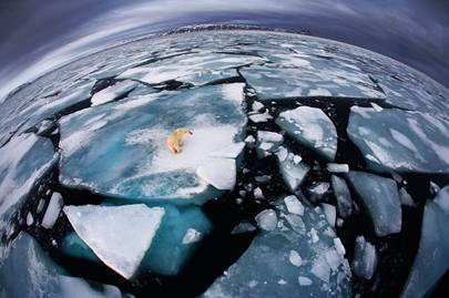 Wildlife Photographer of the Year Awards 2012: 'Ice Matters'