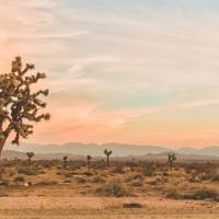 23. JOSHUA TREE, CALIFORNIA