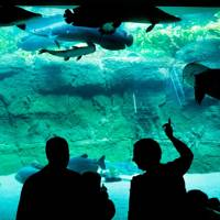 Zoos & aquariums in Copenhagen