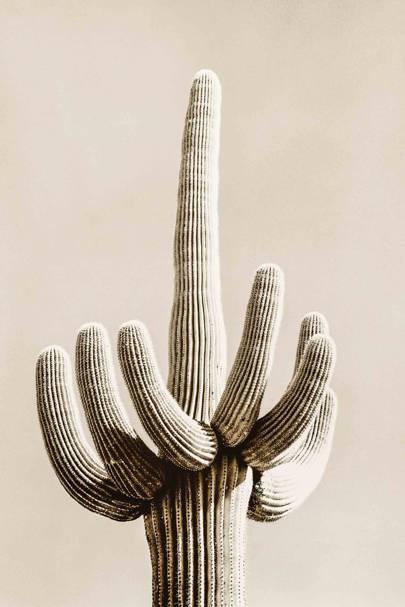 Tucson, Arizona, 2005