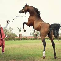 Horse-riding in Morocco
