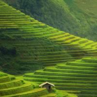 Mu Cang Chai Rice Terrace Fields, Vietnam