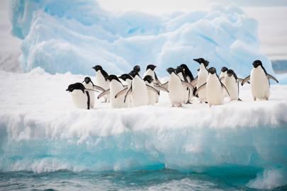 13. Antarctica