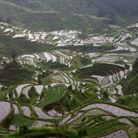 Rice terraces of Rongshui, China