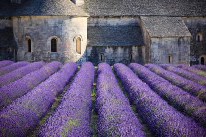 6. Lavender in Provence, France