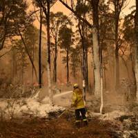1. Support fundraisers donating to the Australian bushfire crisis