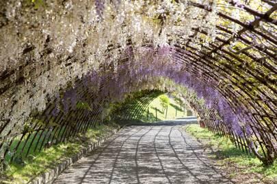 Kawachi Fuji Gardens, Kitakyushu, Japan