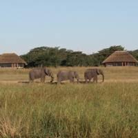 Safari season: Zimbabwe