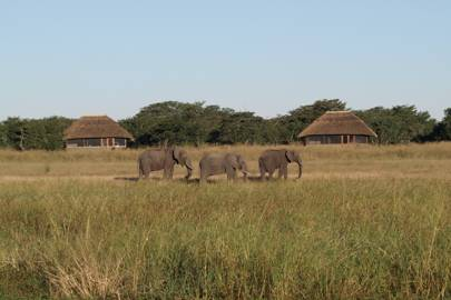 Safari season: Zimbabwe