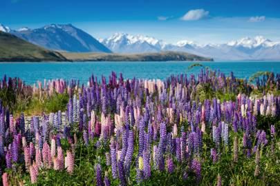 24. Lake Tekapo, New Zealand