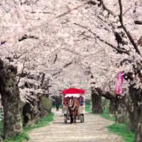 Making tracks in rural Japan