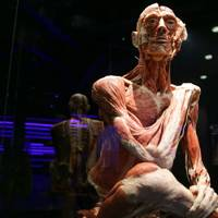Body Worlds, London
