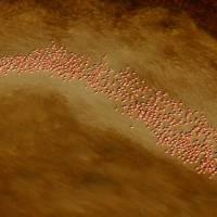 A Swirl of Caribbean Flamingos