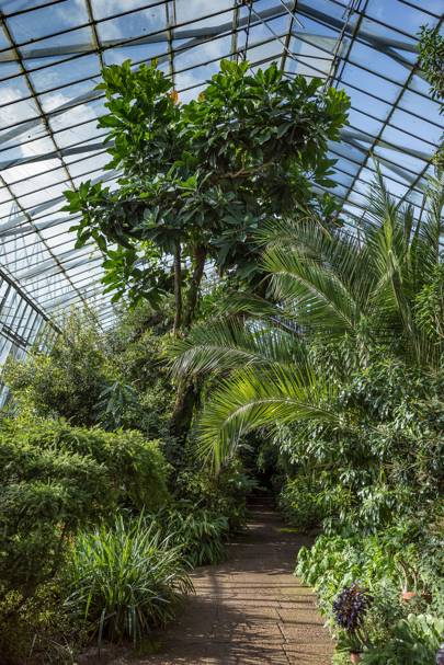 11. ROYAL BOTANIC GARDEN EDINBURGH