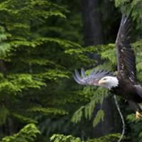 An introduction to Vancouver Island, British Columbia