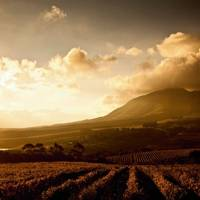 The wine regions