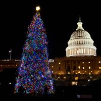 The Capitol Christmas tree, Washington