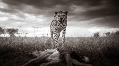 Raw Nature, Kenya