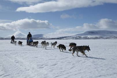 Go with the floe: husky-sledding in Finnish Lapland