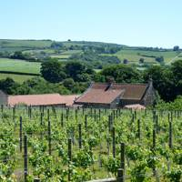 Ryedale Vineyards, Yorkshire