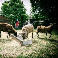 Farm life, London