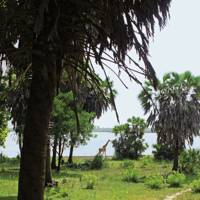 SELOUS SAFARI CAMP, Tanzania