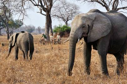 Safari season: Zambia