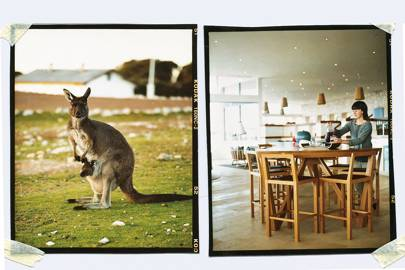 The wildlife of Kangaroo Island, Australia