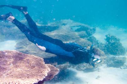 Whale sharks around Ningaloo Reef