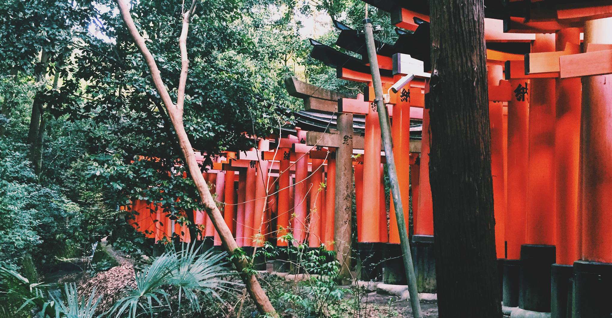 10 cool things to do in Kyoto