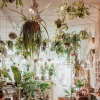 Wildernis plant shop