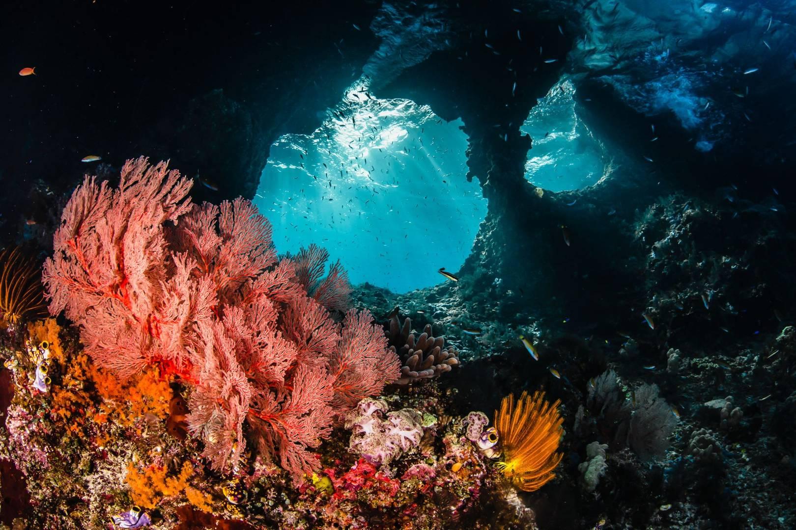 Diving spot di Kepulauan Raja Ampat   Sumber: Condé nast traveller