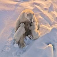 Polar expeditions