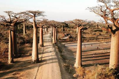 6. Avenue of the Baobabs, Madagascar