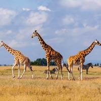 3. KENYA, AFRICA