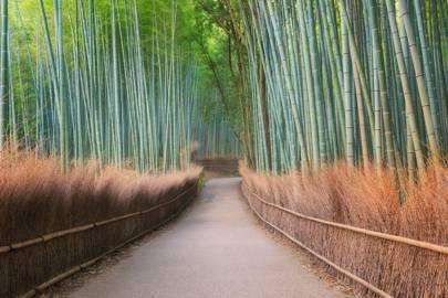5. Arashiyama Bamboo Grove, Japan