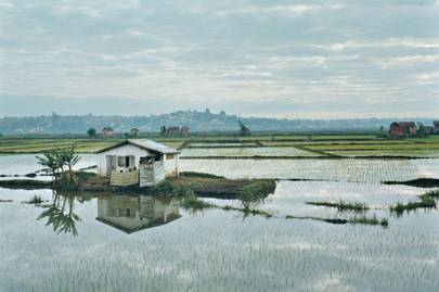 Rice paddies on the outskirts of the capital, Antananarivo