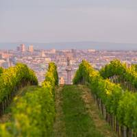 THE WINE-BUFF ONE: VIENNA