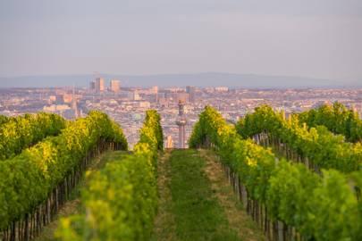 THE WINE-BUFF ONE: VIENNA