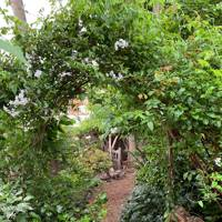 World Peace Garden, Hampstead