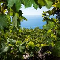 5. Sample Croatia's finest wines
