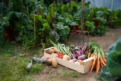 2. Grow your own produce